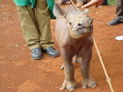 a baby rhino rescued by the Trust