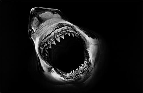 b-shark14