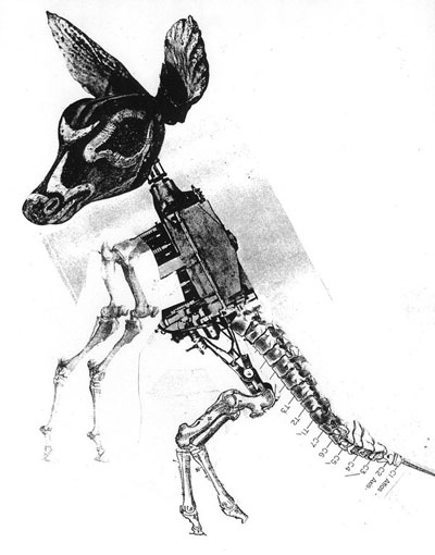 Nicolas Lampert - Kangaroo