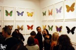 am-sbutterfly-damien-hirst