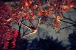 rm_jumping_red_leaves