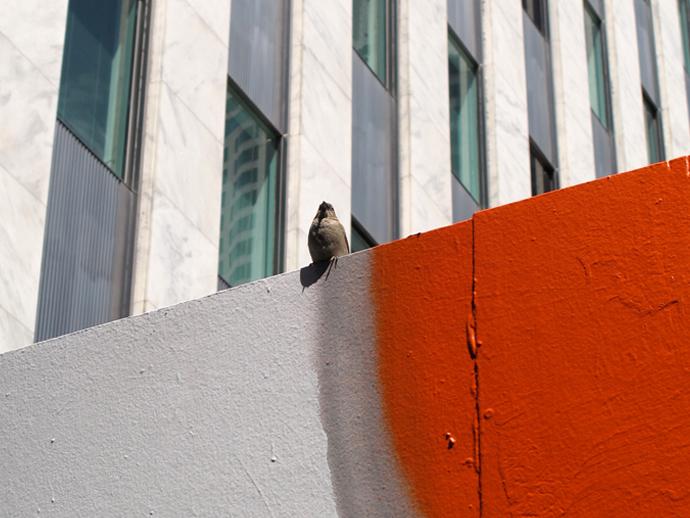 13.Bird.2s