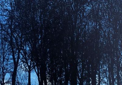dark.forest.1