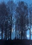 dark.forest.2