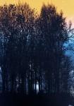 dark.forest.3