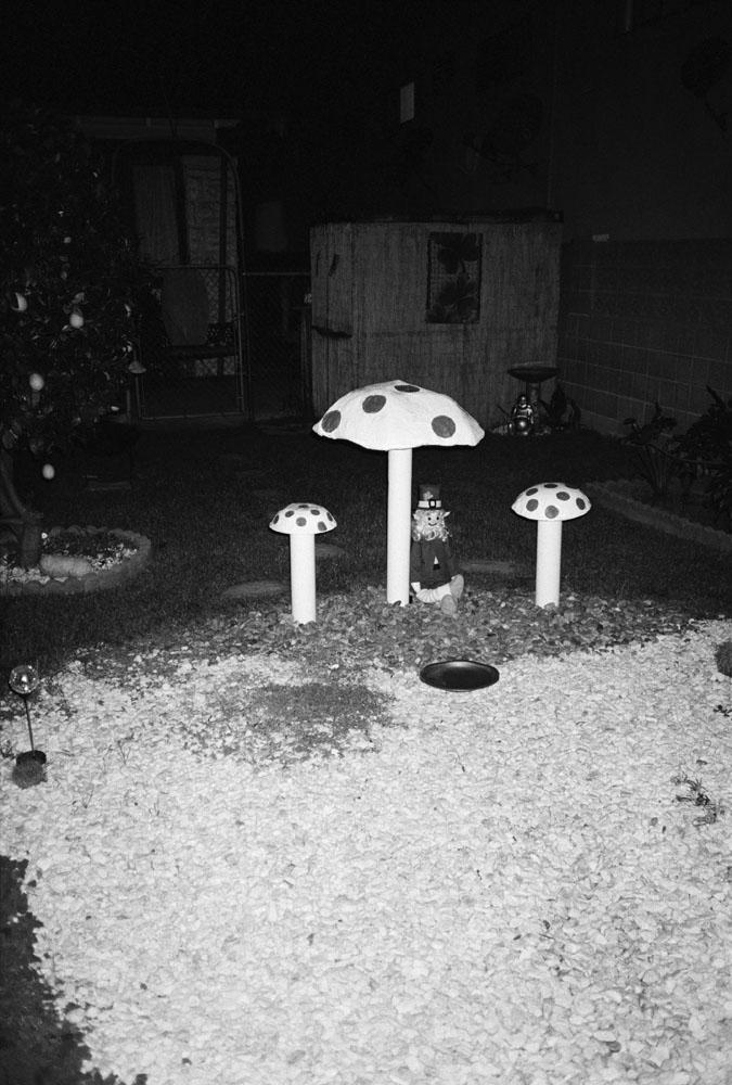 Untitled_mushrooms