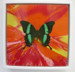 Damien Hirst: 'Wondrous'. 2008. Butterfly with household gloss on canvas. Other Criteria, London