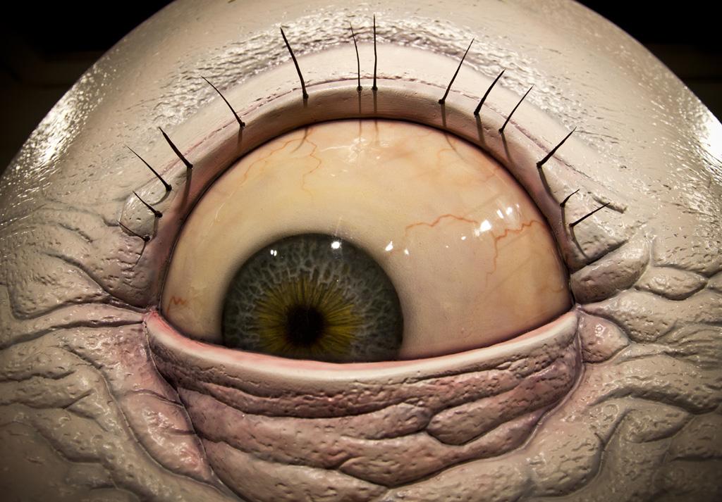 Глаза на попе картинка