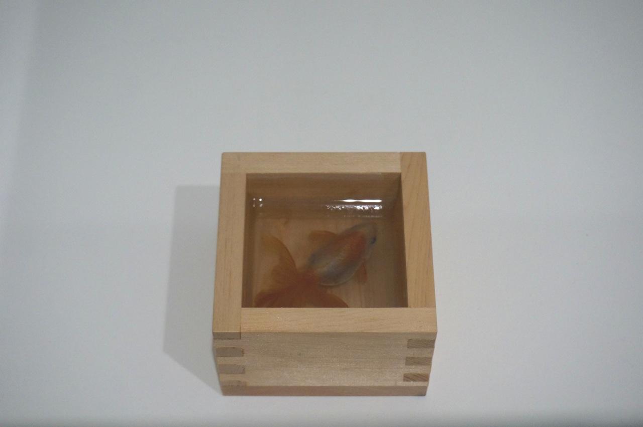 Riusuke Fukahori Liner AM 01