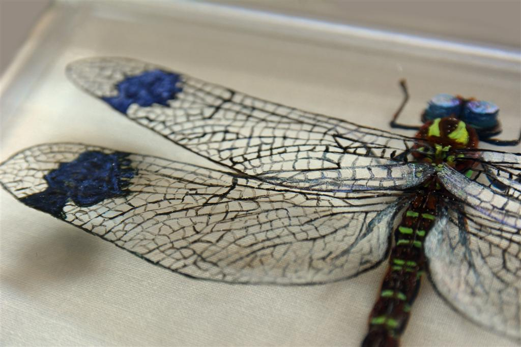 Hisham Echafaki - Queens Head Dragonfly (detail)