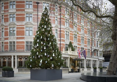 Connaught Christmas Tree 2015 720 x 500