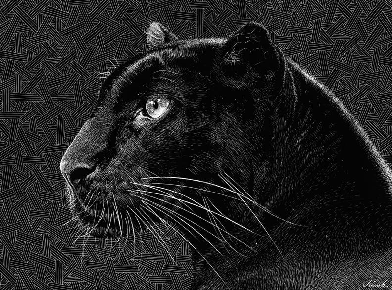 black-panther002-1